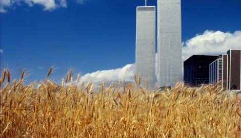 agnes-denes_wheatfield-a-confrontation
